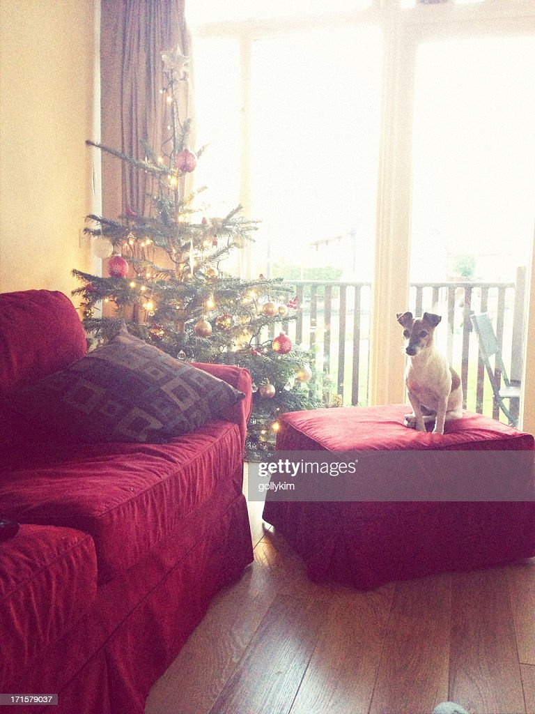 Dog sits next to Christmas Tree in a living room