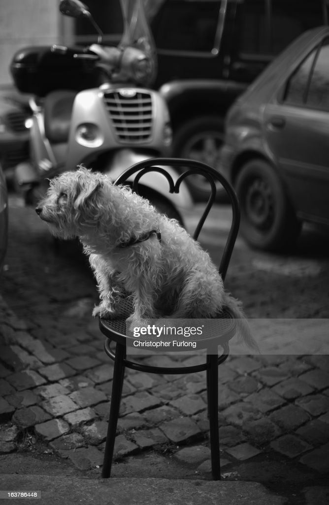 A dog sits on a chair outside a cafe and watches the world go by on March 15, 2013 in Rome, Italy. Daily life continues around the vatican as romans prepare for the inauguration mass of Pope Francis, the first ever Latin American Pontiff.