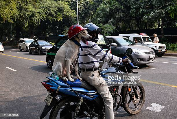 A dog sits on the back of a motorcycle while wearing a safety helmet in New Delhi on November 4 2016 / AFP / CHANDAN KHANNA
