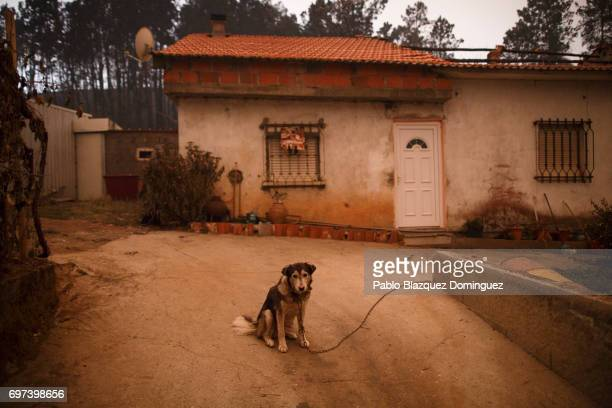 A dog sits outside a burned house after a wildfire took dozens of lives on June 18 2017 near Castanheira de Pera in Leiria district Portugal On...