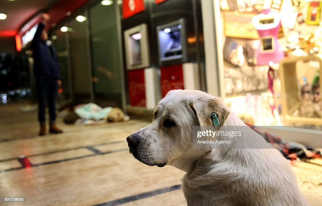A dog sits outside of a shopping center during cold weather in Bakirkoy district of Istanbul, Turkey on January 8, 2017. Citizens feed animals and lay blankets on the floor to warm them up during inclement weather conditions.