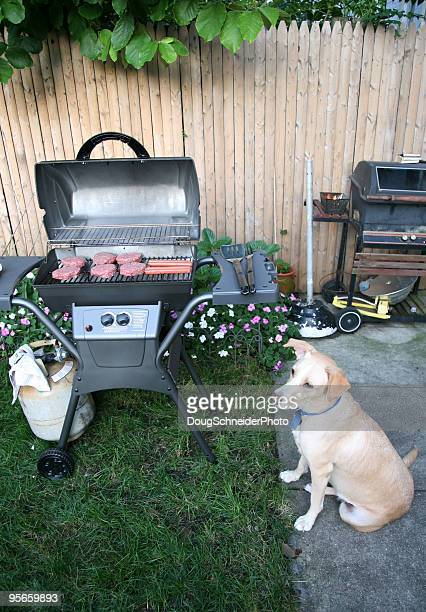 Dog Sitting at Barbecue
