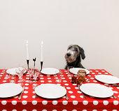 Dog sitting at table