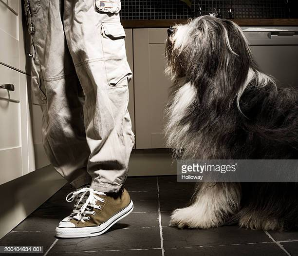 Dog sitting by boy (11-13) standing in kitchen, low section