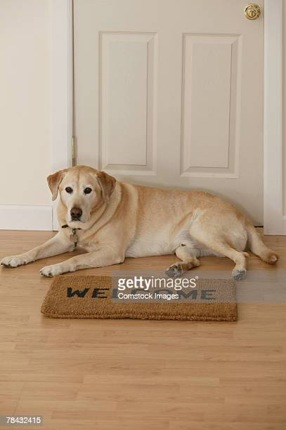 Dog sitting by doormat