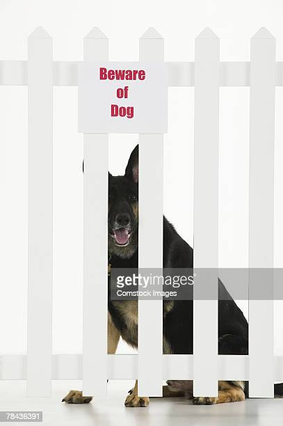 Dog sitting by fence with beware of dog sign