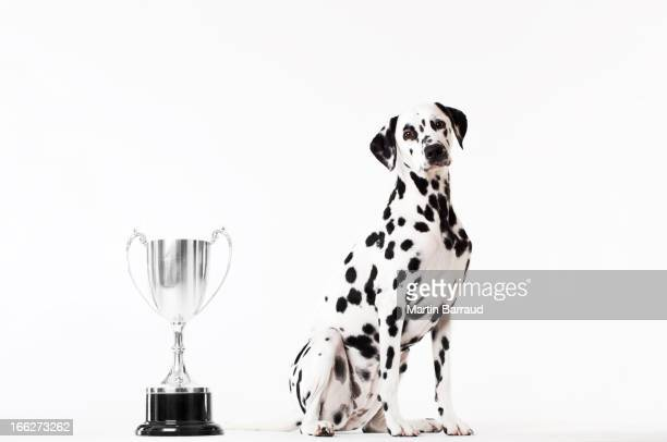 Dog sitting by trophy