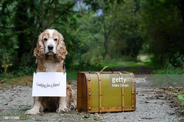 Dog sitting close to old suitcase on path