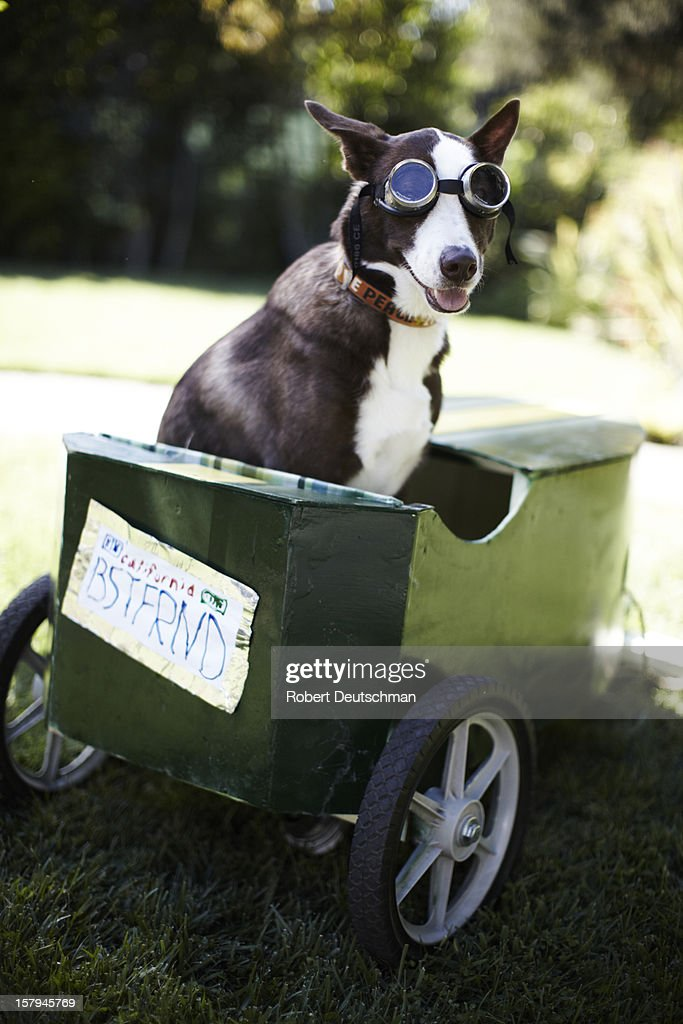A dog sitting in a go-kart. : Stock Photo