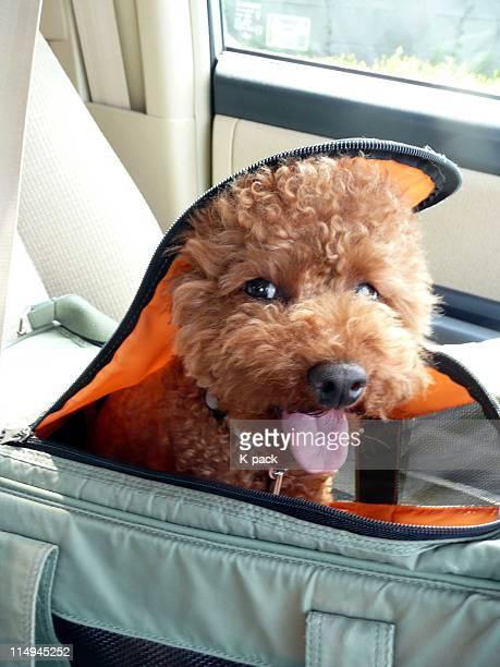Dog sitting in bag