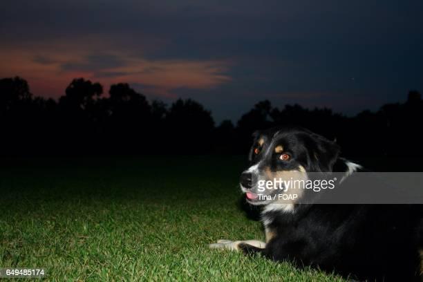 Dog sitting in grass at night