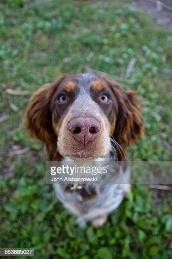 Dog sitting look up