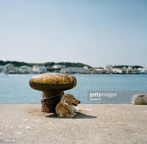 Dog sitting near sea