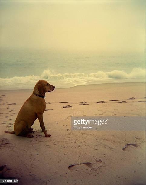 Dog sitting on a beach