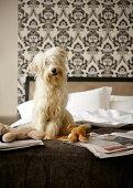 Hund sitzen auf dem Bett mit weichen Spielsachen und Tageszeitung