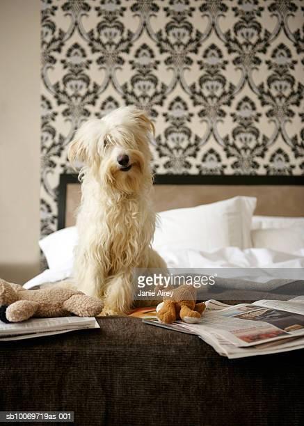 Perro sentado en la cama con el periódico y juguetes blandos los