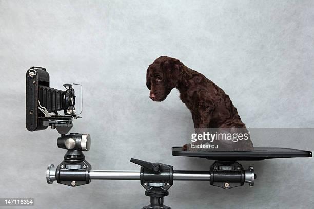 Dog sitting on camera stand