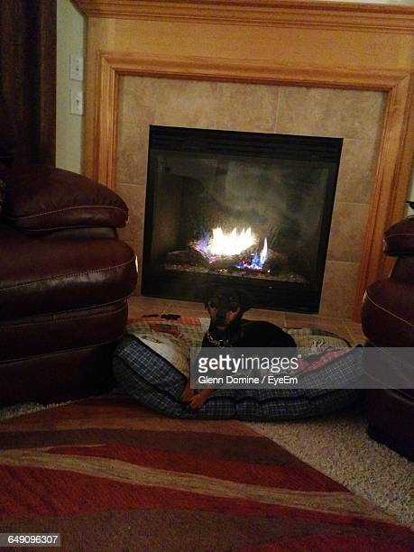 Dog Sitting On Cushion In Front Of Fireplace