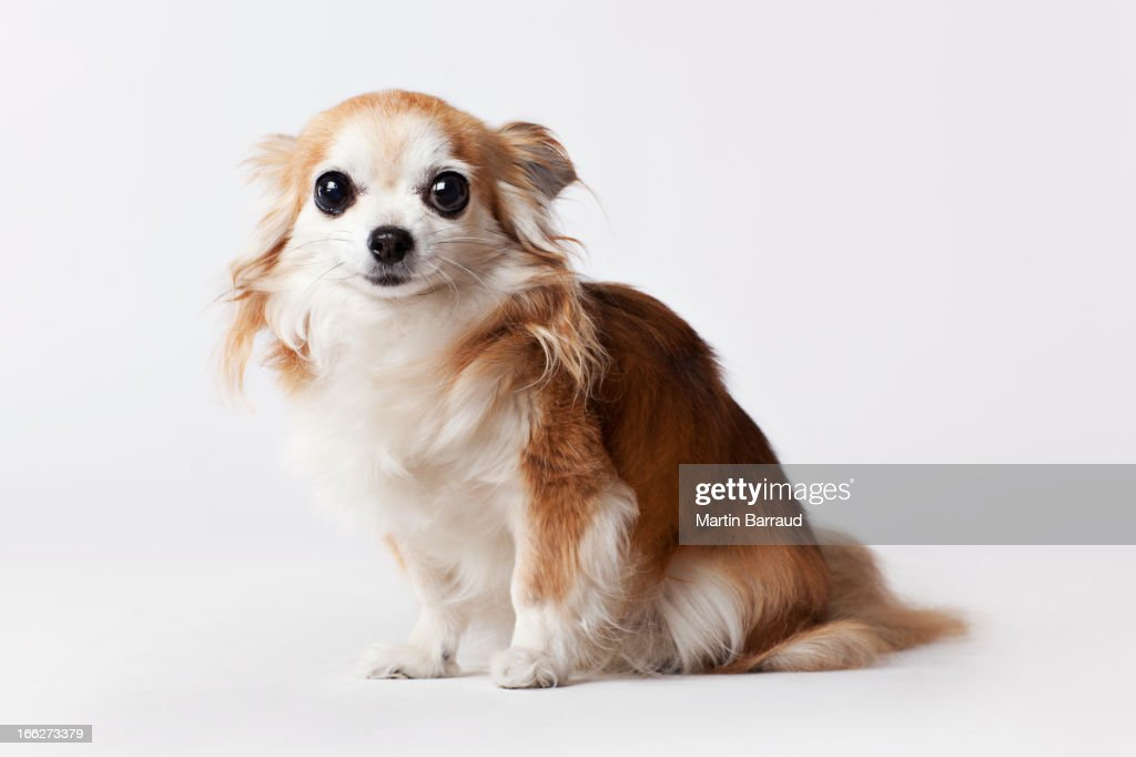 Dog sitting on floor : Stock Photo