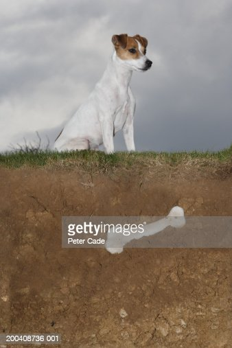 Dog sitting on grass above buried bone, side view : Stock Photo