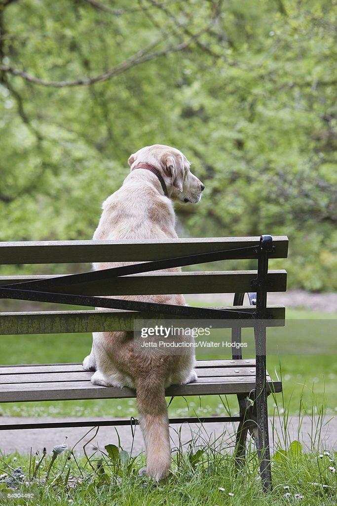 Dog sitting on park bench : Stock Photo