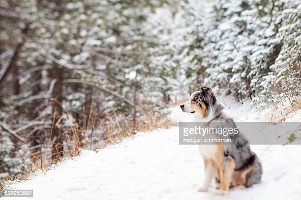 dog sitting on snow covered trail