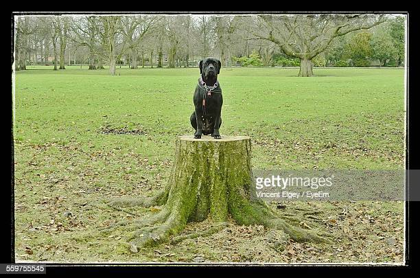 Dog Sitting On Stump