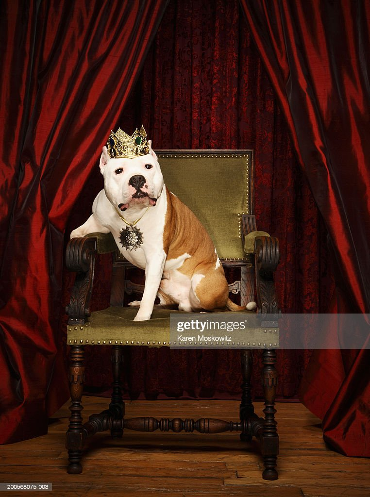 Dog sitting on throne with crown on head : Stock Photo
