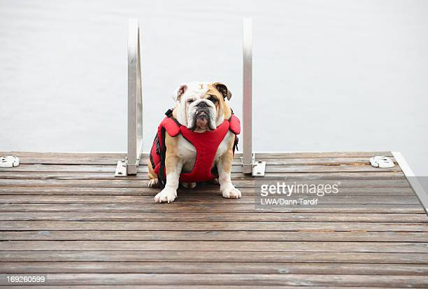 Dog sitting on wooden pier in lake