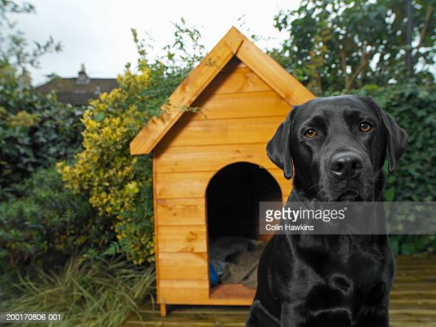 Dog sitting outside kennel in garden, close-up (focus on dog)