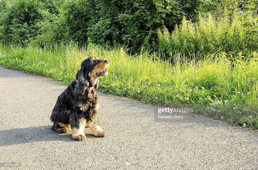 Dog sitting : Stock Photo