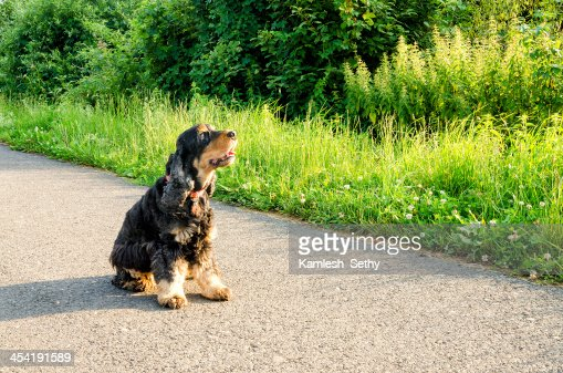 Cão Sentado : Foto de stock