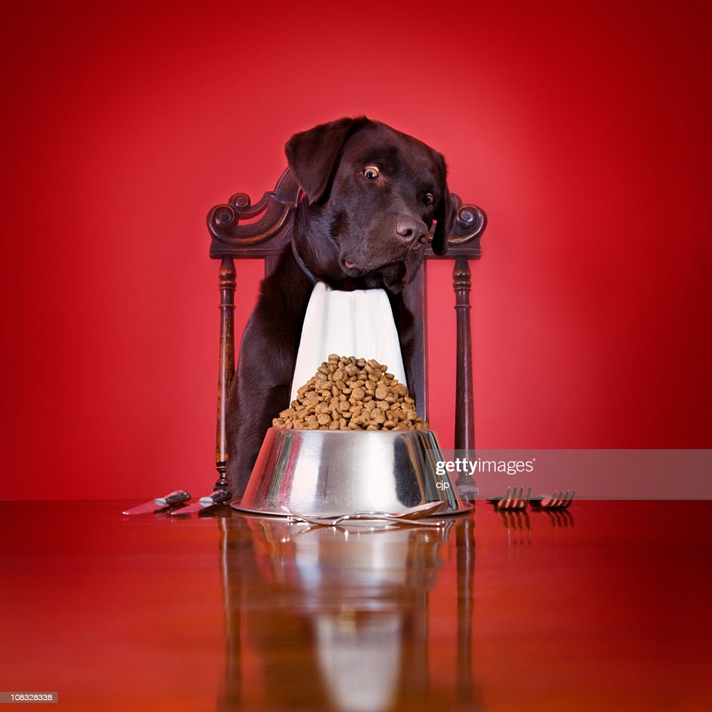Dog's Dinner : Stock Photo