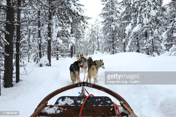Dog Sled In Snow Covered Forest During Winter