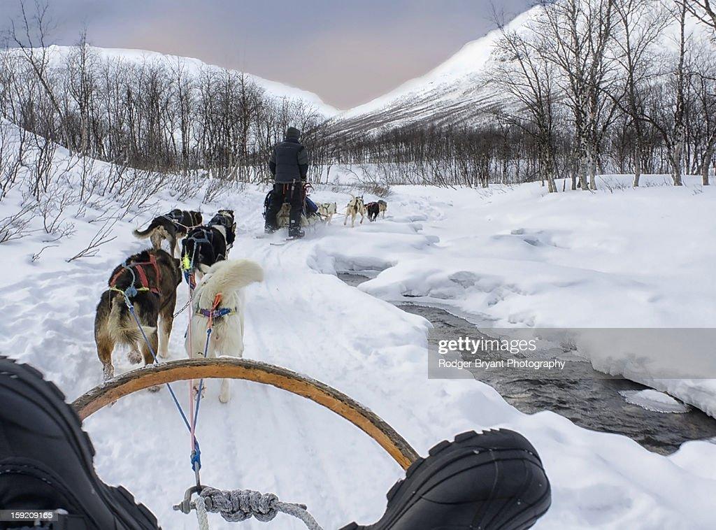 Dog Sled Racing in Lindgen Alps Tromso Norway