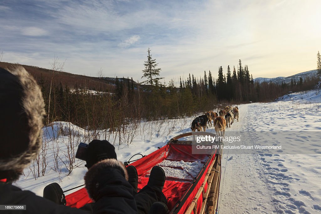 Dog sledder and team in snow