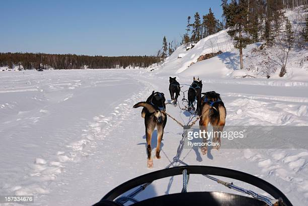Dog sledding in the Arctic.
