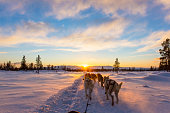 Musher and passenger in a dog sleigh with huskies a cold winter evening.
