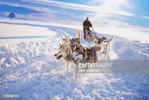 Dog sledge
