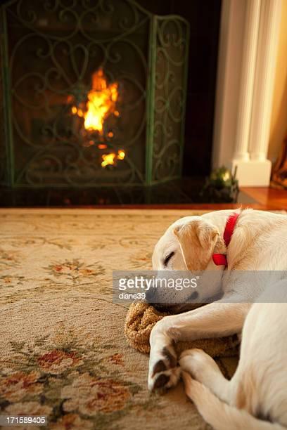Hund Schlafen am offenen Kamin