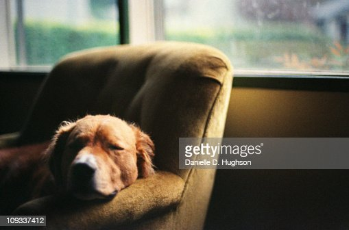 Dog Sleeping in Lounge Chair : Stock Photo