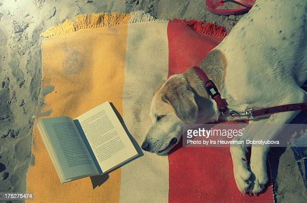 Dog sleeping on the beach next to open book