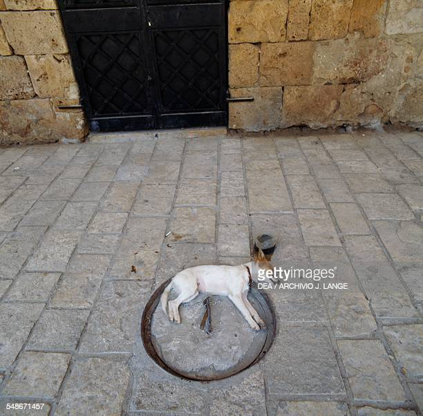 Dog sleeping on the street Akko Israel