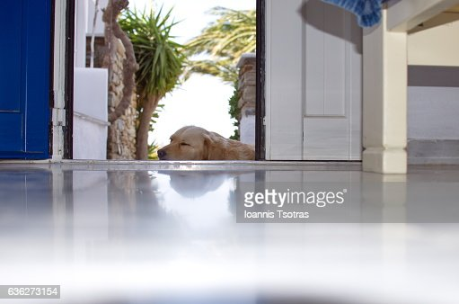 Dog sleeping while guarding the front entrance