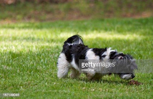 Dog Smelling Feces Stock Photo