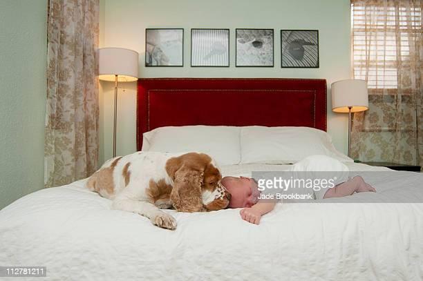 Dog smelling sleeping baby