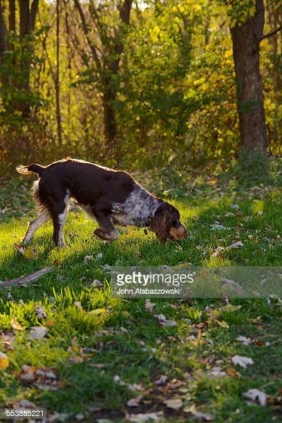 Dog sniffing in the sun