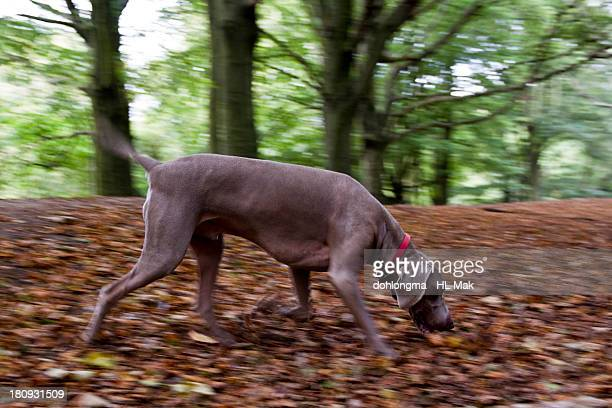 Dog sniffing in the woods