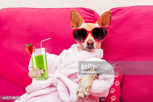 Cão de spa de bem-estar : Foto de stock