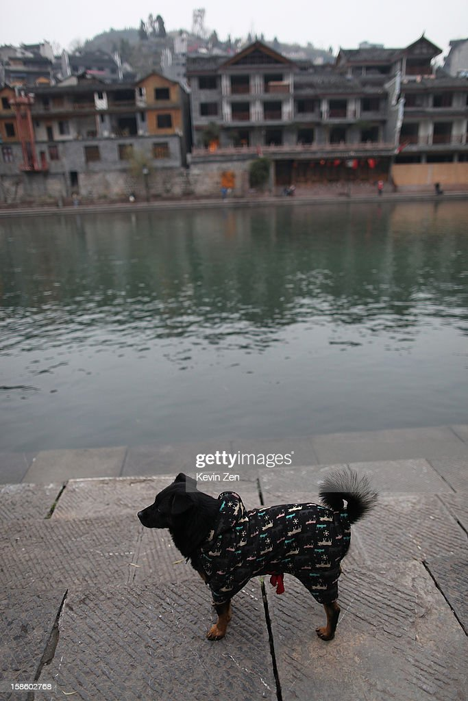 A dog stand by Tuojiang River, dressed a Cotton-padded clothes on December 18, 2012 in Fenghuang, China. Fenghuang Town was built by Emperor Kangxi in 1704 and after 300 years, the city's ancient appearance has been well preserved. Hunan is located in southwest Hunan Provience of China with a population of 370,000 within a total area of 1700 square kilometers.